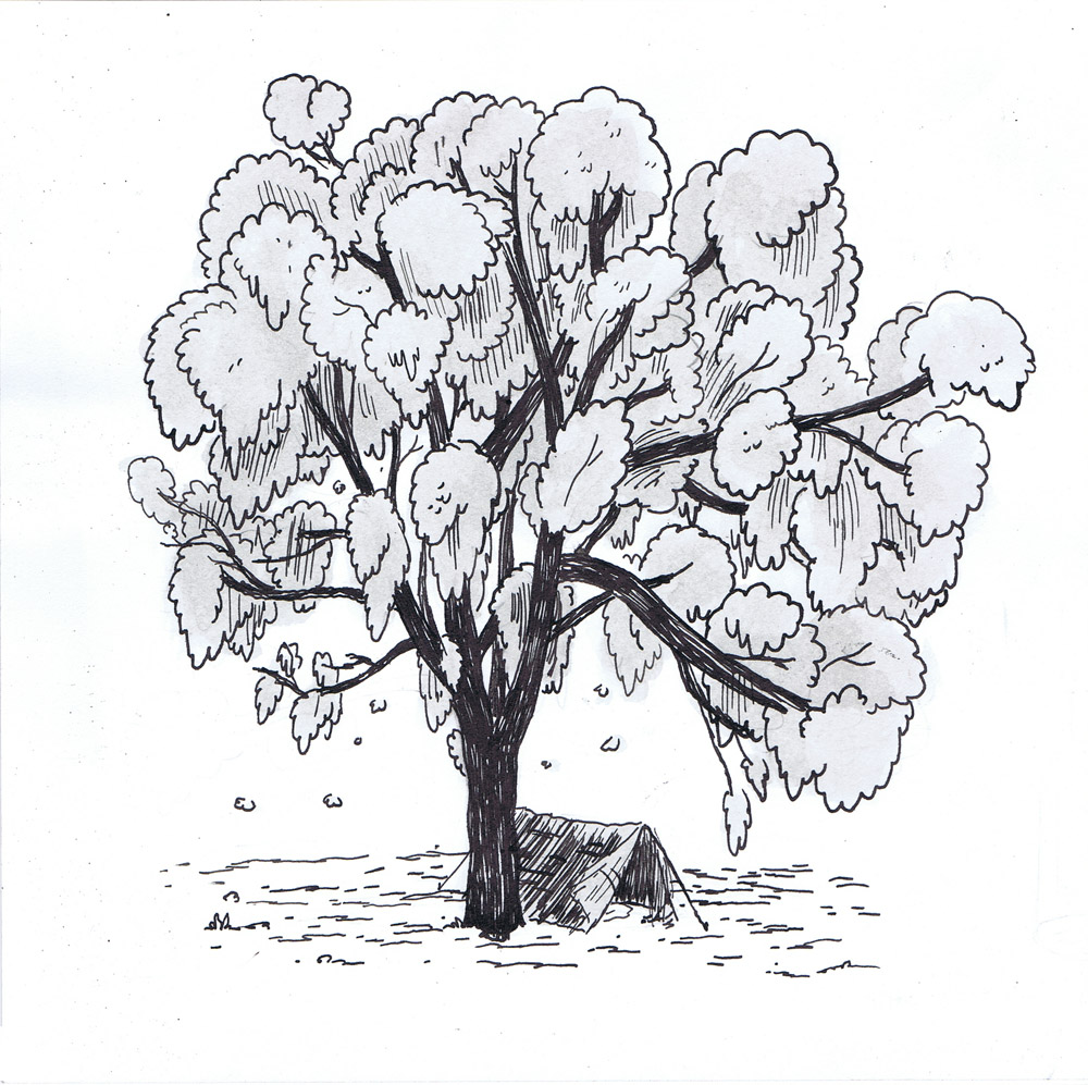 Cotton wood Tree - Vice Illustration